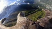 Victor: This eagle gives bird's eye view of the Alps to raise climate change awareness