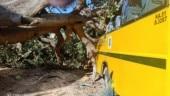 Bengaluru: Tree falls on school bus, 36 children escape unhurt