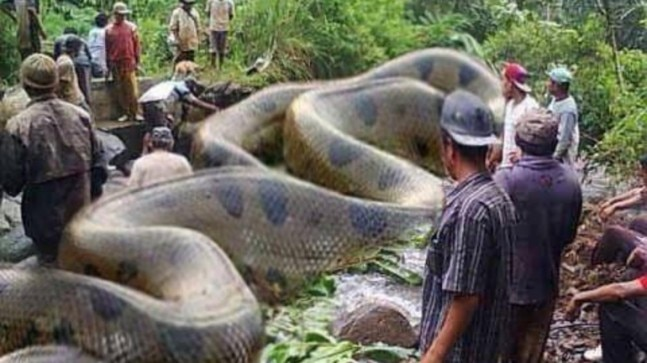 Fact Check: Truth behind viral post of the largest snake killed in Amazon