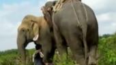 Assam: Wild elephant Laden that killed several in Goalpara captured