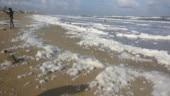 Chennai: Famous tourist destination Marina Beach spits out foam