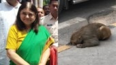 Woman seeks help from Maneka Gandhi for injured monkey. Her quick response wins the Internet