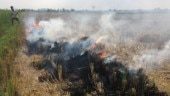Stubble burning dips in north India, satellite data show