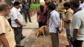 Bengaluru doctor shoots stray dog for too much barking, gets arrested