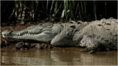 15-year-old boy saves young sister's life after crocodile attacks her in the Philippines