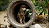 Sleeping dog mercilessly beaten to death by security guard in Mumbai