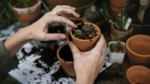 Want to buy air purifying plants for home? Check out 5 plant nurseries in Delhi NCR