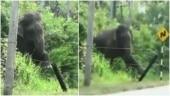 Elephant breaks electric fence using a brilliant technique. Viral video leaves Internet stunned