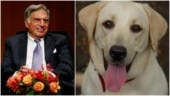 Ratan Tata shares heartfelt adoption post for 9-month-old abandoned dog. Internet is all heart
