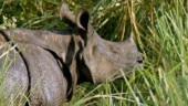 Rhinos to be reintroduced at Corbett Tiger Reserve