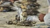 Rajasthan government confirms botulism killed thousands of birds at Sambhar Lake in Jaipur