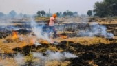 Stubble burning: Punjab govt takes action against 3,000 farmers