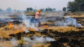 Crop fire crackdown hits green farms too