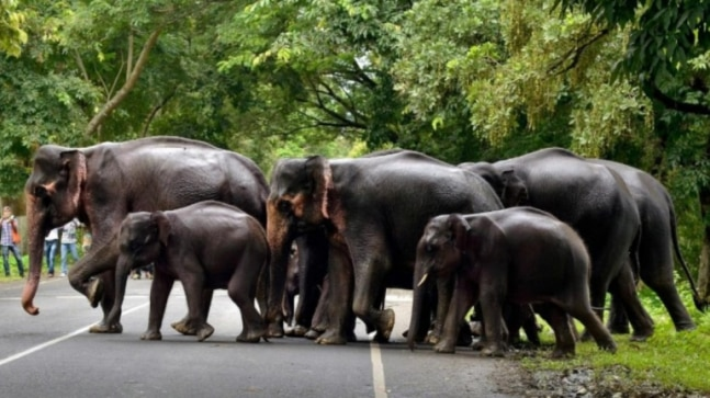 Villagers thrash lady forest guard after jumbo kills man in odisha's Sambalpur