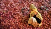 Maha cloth shop offers 1kg onions free on purchase of Rs 1,000