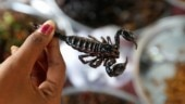 Bizarre: Woman gets stung multiple times on leg by a scorpion on United Airlines flight