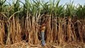 UP: BKU threatens to launch agitation against unacceptable sugarcane MSP