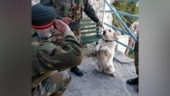 Story behind viral photo of dog saluting top Army commander will make you go aww