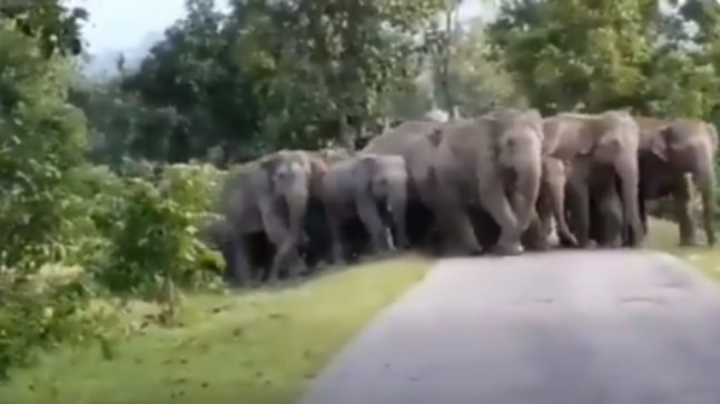 Elephant herd crosses a road in Chhattisgarh in perfect order. Internet reacts