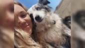San Francisco woman offers Rs 5 lakh reward and hires plane to find her stolen dog