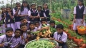 HRD Ministry directs all schools to set up kitchen gardens to teach kids how to grow food