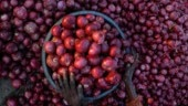 Odisha sheds tears without cutting onions after price soars to Rs 120 a kg