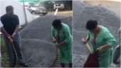 Woman captures 20kg python alive in epic video from Ernakulam. Trending? You bet