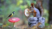 Old pic of squirrel and bird having conversation goes viral. Straight out of fairytale, says Twitter