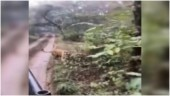 Tiger chases tourist vehicle at Ranthambore National Park. Scary video goes viral