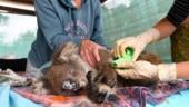 Bushfire crisis: Australia may list Koalas as endangered, announces $76 mn emergency fund
