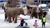 Two elephants escape from circus in Russian city