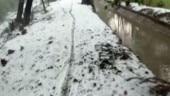 Unseasonal rain, hailstorm destroys crops in Haryana's Rohtak