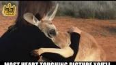 Fact Check: Touching image of kangaroo hugging woman has no relation to Australian bush fires