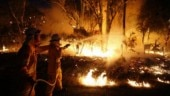 As bushfires rage in Australia, 24 charged for manually starting fires!