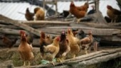 H5N1 bird flu outbreak reported in Chhattisgarh: Report