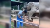 Adorable video of baby elephant playing with a man goes viral. Internet is in love