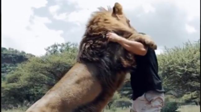 Video of man hugging and kissing pride of lions goes viral. Internet is in shock