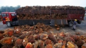 Malaysian PM's CAA remark likely to cost his country more than palm oil exports