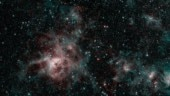 Spitzer image of Tarantula Nebula spins web of mystery for scientists