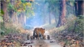 Magical picture of tigress and her 5 cubs goes viral. Unreal, says Internet
