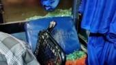 Karnataka bandh: Protesters hurl stones at bus in Farangipet, CM invites pro-Kannada outfits for talks