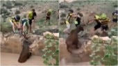Group of cyclists rescue antelope from ditch in viral video. So brave, says Internet