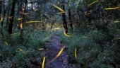 Fireflies are dying and of course it's because of humans killing Earth's natural magic