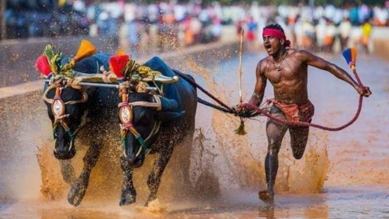 Srinivas Gowda shot to fame after his record-breaking run at a Kambala race in Karnataka (IANS Photo)