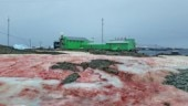 Antarctica snow turns blood red in viral pictures. Here is the full story