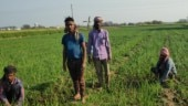 Onion, water and liquor for Covid-19: How 'aware' rural Punjab is about coronavirus threat