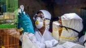 Bird flu in Bihar's Nawada district