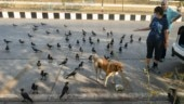 Good news! Dog feeders in Delhi can now get a feeder pass, says Maneka Gandhi