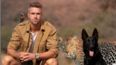 'Animal whisperer' Kevin Pietersen trolled by Yuvraj Singh and fans for photoshopped Instagram picture