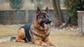 Army major dies trying to save his dog from fire in Jammu and Kashmir